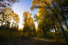 Beautiful forest in autumn Stock Image