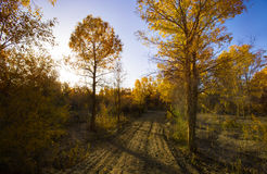 Beautiful forest in autumn Royalty Free Stock Photography