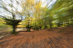 Beautiful forest in autumn with zooming effect. Otzarreta, Spain Stock Photography
