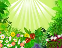 Beautiful forest background Stock Photo