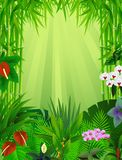 Beautiful forest background Royalty Free Stock Photo