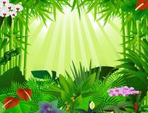 Beautiful forest background Stock Images