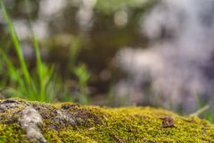 Beautiful forest background. Forest floor. Moss. Tree roots. stock photos