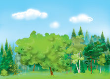 Beautiful forest  background Royalty Free Stock Images
