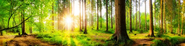 Beautiful forest royalty free stock photos