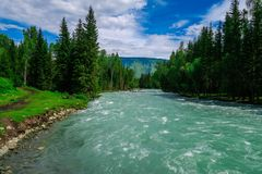 Beautiful forest blue river. Kucherla river in Belukha national park, Altai mountains, Siberia, Russia stock photography