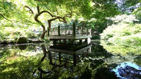 Beautiful forest, bridg e reflection in San Francisco Botanical Garden. At San Francsisco, California, United States stock video