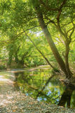 Beautiful forest with a bridge and a swamp at Prokopi in Euboea in Greece. Royalty Free Stock Image