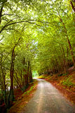 Beautiful forest with bright green leaves Stock Photography