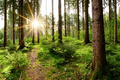 Sunrise in the forest stock photography