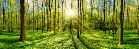 Beautiful forest with bright sun royalty free stock photography