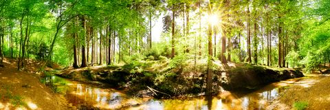 Beautiful forest with brook in bright sunshine stock photography