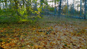 Beautiful Forest In Early Autumn. Crane shot of a beautiful deciduous forest in bright colors in the Crimea in early autumn - yellow leaves on the ground changed stock video