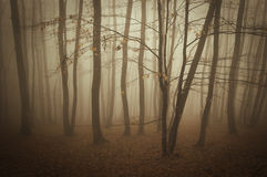 Beautiful forest with fog and strange trees Royalty Free Stock Images