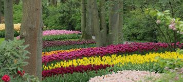 Beautiful forest garden with colorful tulips stock photos