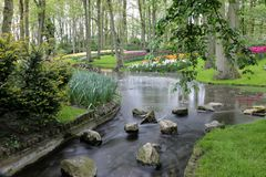 Beautiful forest garden with flowing stream and colorful tulips royalty free stock photography