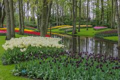 Beautiful forest garden with stream and colorful tulips stock image
