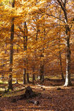Beautiful forest in indian summer Stock Photography