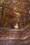 Beautiful forest in indian summer Royalty Free Stock Photos