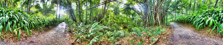 Beautiful forest in Jamaica Stock Photo