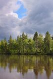 Beautiful forest on the lake Royalty Free Stock Photo