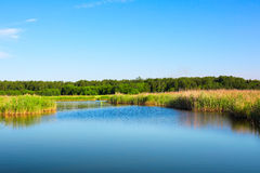 Beautiful forest lake lake under blue cloudy sky. Landscape royalty free stock photography