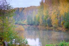 Beautiful forest landscape in autumn. stock photo
