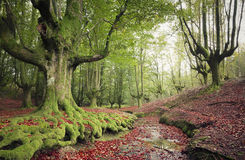Beautiful forest landscape Royalty Free Stock Photo