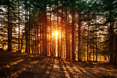 Beautiful forest landscape stock images
