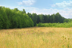Beautiful forest landscape, dense green Royalty Free Stock Photography
