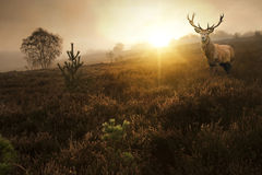 Beautiful forest landscape of foggy sunrise in forest  Stock Photos