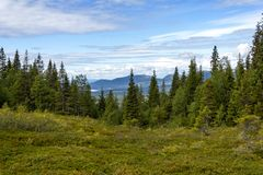 Beautiful forest landscape in the Kola Peninsula Royalty Free Stock Photo