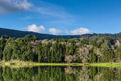 Beautiful Forest Landscape with Lake and Mountains Stock Images