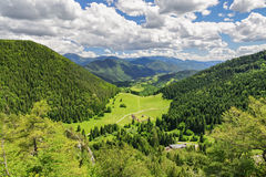 Beautiful forest landscape Royalty Free Stock Image