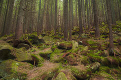 Beautiful forest with large mossy stones Royalty Free Stock Photos