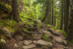Beautiful  forest with large mossy stones Royalty Free Stock Photography