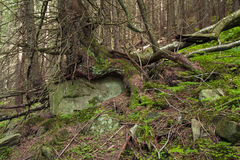 Beautiful  forest with large mossy stones Stock Photos