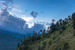 Beautiful Forest, Manali Stock Photo