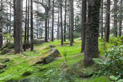 Beautiful forest, Manali Royalty Free Stock Photos