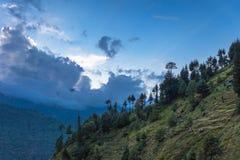 Beautiful forest, Manali. Beautiful deodar forest in Manali on sunset, Himachal Pradesh, India Stock Photo