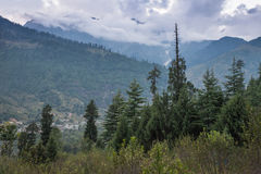 Beautiful forest, Manali Stock Image