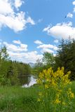 Beautiful forest mountain scenery at lakeside stock photography