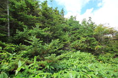 Beautiful forest of Mt.Yakedake, central Japan Stock Photos