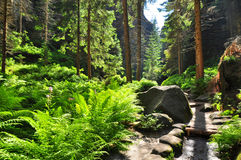 Wood forest nature Royalty Free Stock Photo