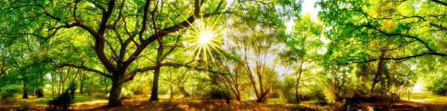 Beautiful forest panorama royalty free stock photography