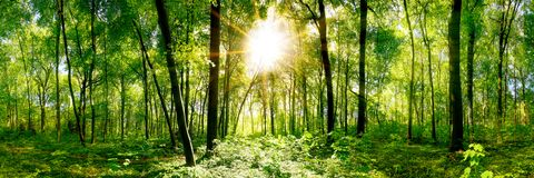 Beautiful forest panorama royalty free stock photos