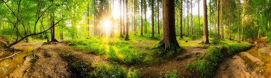 Beautiful forest royalty free stock photo