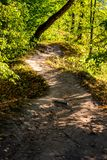 Beautiful forest path illuminated by the sun at sunset royalty free stock photos