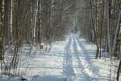 Beautiful forest path in winter Stock Photos