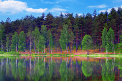 Beautiful forest reflecting on calm lake shore Royalty Free Stock Images